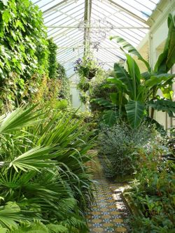 Inside the greenhouse, Lyme Park, Cheshire