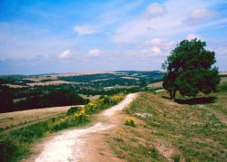 A picture of Cissbury Ring