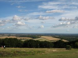 Kingley Vale in Sussex