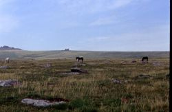 LANDSCAPES IN BODMIN MOOR, CORNWALL
