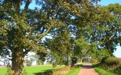 Country lane at Alnwick, Northumberland.