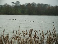Stanford Reservoir, Leicestershire