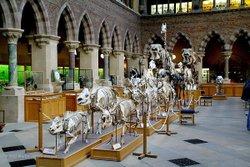 Oxford University Museum mammal skeletons.