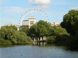 A view of the London Eye from St. James's Park, London.