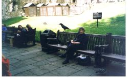 The Ravens at The Tower of London Wallpaper