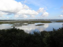 A picture of Arne RSPB Reserve