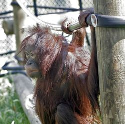 A picture of Monkey World Ape Rescue Centre