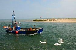 Mudeford Fishing Boat & Flock of swans.