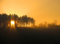 Sunrise through the Pines, Cannock Chase