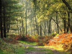 Autumn on Cannock Chase