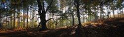 Autumn Panorama, Cannock Chase