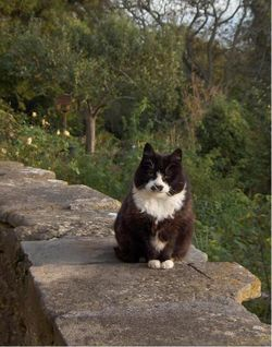 Hitler's Cat, Staples Hill, Freshford, Somerset