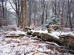 Lickey Hills Country Park, Lickey, Worcestershire Wallpaper