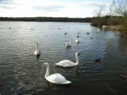 Groby Pool Wallpaper