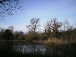 Mill Lake at Woods Mill Nature Reserve