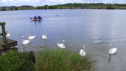 Swans and Canoes at Pools Brooke Country Park, Derbyshire