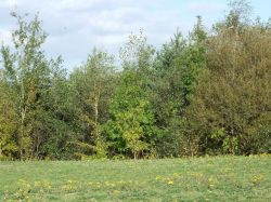 New Lount Nature Reserve, Lount, Leicestershire