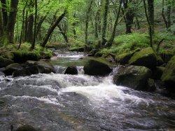 Golitha Falls, Draynes, Cornwall