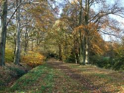 Merrions Wood, 5 minutes walk from the Holiday Inn M6 Junction 7