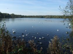 Groby Pool, Groby, Leicestershire Wallpaper