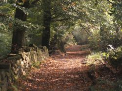 Autumn in the Woods, Hurst Green, Lancashire