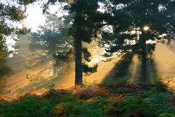 Autumn Mists on Cannock Chase