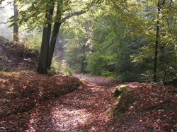 Autumn in Mill Wood, Hurst Green, Lancashire