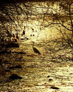 Heron, River Tame, Greenfield