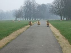 The Guardians of Burghley House!