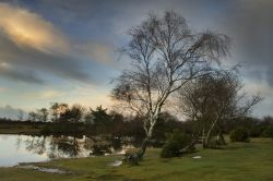 Hatchet Pond, New Forest, Hampshire