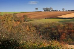 Autumn View Near South Cave, East Riding of Yorkshire