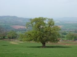 The Wye Valley south of Monmouth, Monmouthshire