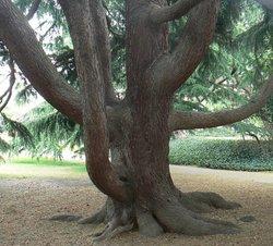 Tree in Greenwich Park, Greater London