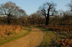 Richmond Park, Richmond upon Thames, Greater London