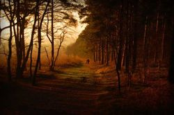 Shoal hill, Cannock Chase Country Park, Staffordshire
