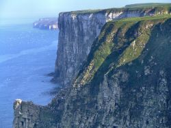 The cliffs at Bempton, East Riding of Yorkshire