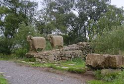 Stone sheep, High Force, Forest-in-Teesdale