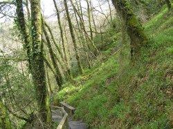 Lydford Gorge in spring green