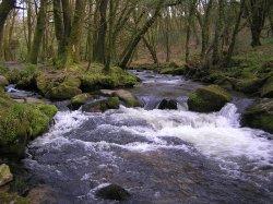 Golitha Falls in spring