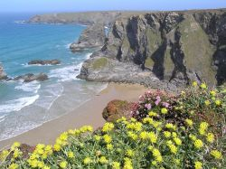 Wild flowers carpet the cliffs at Bedruthan Steps, Cornwall