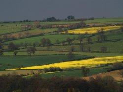 Fields above Chipping Campden
