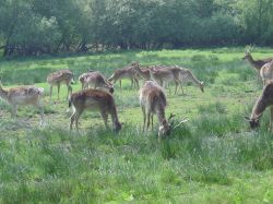 The New Forest (Hampshire)