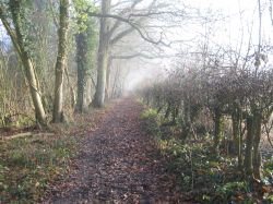 Footpath between Up Nately & Greywell