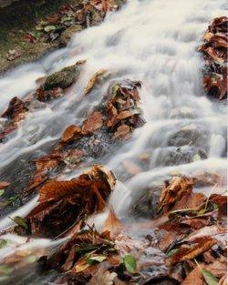 Autum Flow