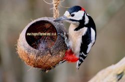 Woodpecker in the New Forest