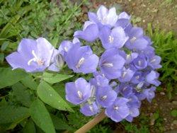 Garden flora in Wheatley