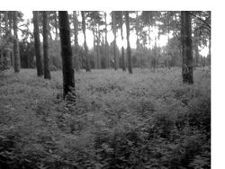 Trowse woods