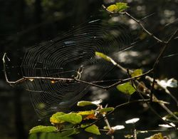 Spider and web, Ivinghoe Common / Ridgeway, Ringshall, Herts.
