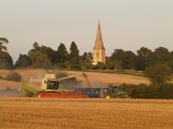 Overdue harvesting, Steeple Claydon, Bucks