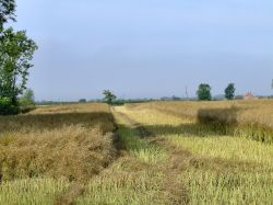 Arable farmland at Newport